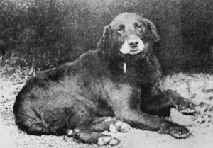 Buccleuch_Avon_1885