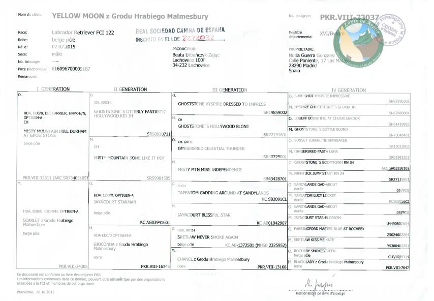 Pedigree Moon - Loyre de Aralla