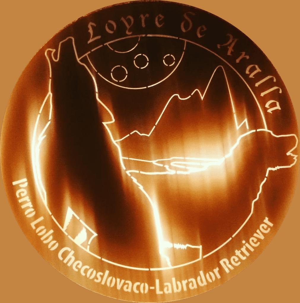 Loyre de Aralla -Perro Lobo Checoslovaco y Labrador Retriever